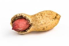 Único amendoim - isolado imagem de stock royalty free