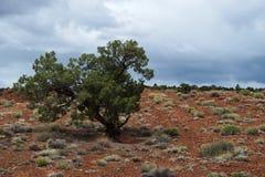 Único arbusto dramático em um deserto dos EUA Imagens de Stock