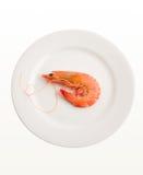 Único camarão na placa Foto de Stock Royalty Free