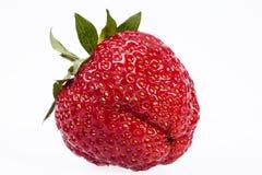 Único fruto da morango isolado no fundo branco Imagens de Stock Royalty Free