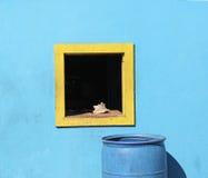 Único fundo amarelo do azul do shell do mar do búzio do quadro de janela Fotografia de Stock
