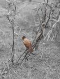 Único pássaro Imagem de Stock