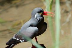 Único pássaro no verão Imagens de Stock