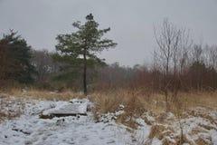 Único pinheiro e ponte de madeira no campo da charneca após a neve imagens de stock