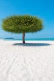 Único retrato da árvore em uma praia em Malásia foto de stock