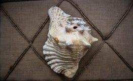 Único Shell Imagem de Stock Royalty Free