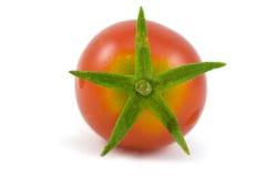 Único tomate de cereja Imagem de Stock