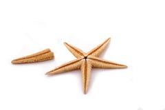 A únicos estrela do mar e corte no fundo branco Fotos de Stock