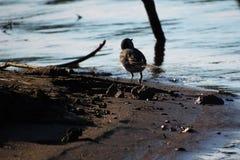 Únicos pássaros imagens de stock
