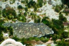 Únicos peixes Imagem de Stock