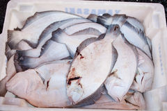 Únicos peixes Imagem de Stock Royalty Free