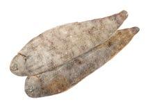 Únicos pescados Imágenes de archivo libres de regalías