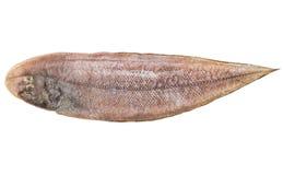 Únicos pescados frescos Imagenes de archivo
