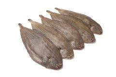 Únicos pescados frescos Imagen de archivo libre de regalías