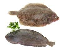 Únicos pescados y pescados del limón Fotografía de archivo