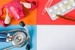 Útero médico ou dos cuidados médicos de projeto do conceito do foto-órgão, ovário, estetoscópio médico diagnóstico da ferramenta  imagem de stock royalty free