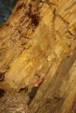 Üben nahe dem Felsen Stockbilder