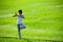 Übendes Yoga des Mädchens, stehend auf dem Paddygebiet Stockbilder