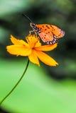 Über Blume Stockfotos