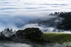 Über dem Nebel Stockbilder