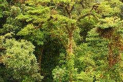 Über den Bäumen Stockbild