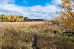 Über den Sumpfgebieten an Eagan-Schutz Lizenzfreies Stockfoto
