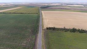 Über die Asphaltstraße unter den Feldern der Sonnenblume und des Weizens hoch fliegen stock video