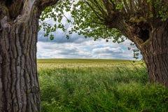 Über einem Kornfeld sind drastische Wolken, im Vordergrund ist grünes Gras und links und Recht sind alte Weiden stockbild