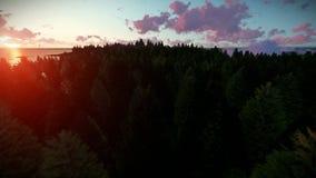 Über Forest Hills und Meer kreuzen, schöner Sonnenaufgang stock video footage