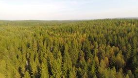 Über gezierten Wald hoch fliegen Stockbild