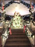 Über herausgestelltem Weihnachtsbaum Stockbilder
