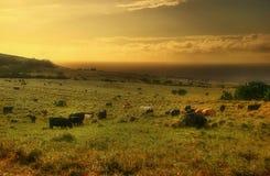 Über sonnige Kühe Lizenzfreie Stockfotografie