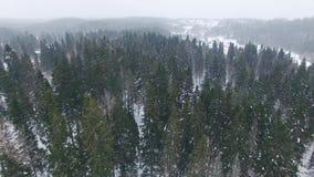 Über Spitze von Tannenbäumen und von Kiefern am bewölkten Tag mit schweren Schneefällen niedrig fliegen stock footage