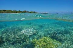 Über Untermeeresschildkröte und Insel mit Erholungsort stockbilder