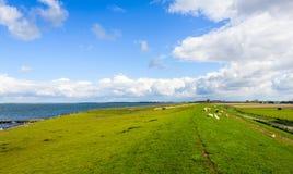 Überblick über einen Damm mit dem Weiden lassen von Schafen nahe bei einer niederländischen Mündung Stockfotos