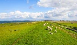 Überblick über einen Damm mit dem Weiden lassen von Schafen nahe bei einer niederländischen Mündung Lizenzfreie Stockfotografie