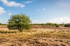 Überblick über einen niederländischen Nationalpark mit purpurroter Heide Stockfotos