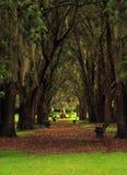 Überdachung von Bäumen Stockbild