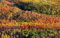 Überdachung von Herbstbäumen Stockbilder