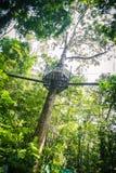 Überdachungs-Weg durch den Regenwald Stockbild
