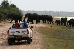 Überfahrtelefanten Stockfoto
