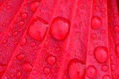 Überfall-Tröpfchen auf roter Blume stockbilder