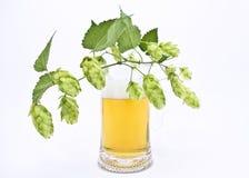 Überfallen Sie frisches Bier mit Schutzkappe des Schaumgummis mit Sprig der Hopfen Stockbild
