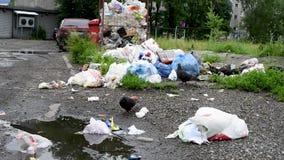 Überfließende Mülleimer in der Stadt mit Tauben, Hunden und Katzen stock video footage