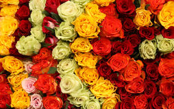 Überfluss an den bunten Rosen Stockfoto