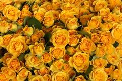 Überfluss an den gelben Rosen Lizenzfreies Stockfoto