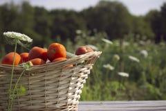 Überfluss an den Tomaten Lizenzfreies Stockbild