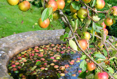 Überfluss an der Frucht Stockfotografie