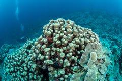 Überflussriff und -Meeresflora und -fauna in Nationalpark Wakatobi, Indone Lizenzfreie Stockbilder