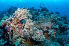 Überflussriff und -Meeresflora und -fauna in Nationalpark Wakatobi, Indone Stockfoto